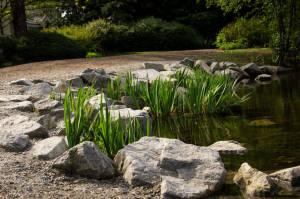 26 - The Pond